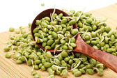Green soybean sprouts on white background — Stock Photo