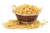 Gold soybean isolated on white background — Stock Photo