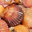 Stock Photo: Live scallops food background