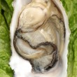 Oyster Crassostrea gigas edible shell mollusk — Stock Photo
