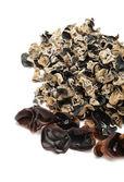 Czarny grzyb na białym tle — Zdjęcie stockowe