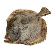 Turbot fish, isolated on white — Stock Photo