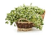 Black bean sprouts on white background — Stock Photo