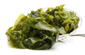 Seaweed on white background — Stock Photo
