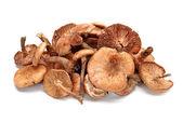 Hazel mushroom on white background . — Stock Photo