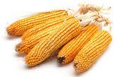 Grain corn closeup on a white background — Stock Photo