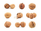 Walnut on white background — Stock Photo