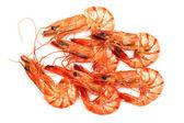 Shrimp on white background. — Stock Photo