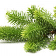 Pine branch — Stock Photo #26836201