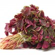 Stock Photo: Amaranth