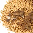 Stock Photo: Gold soybean