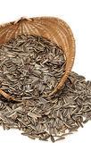 Sunflower seeds — Foto Stock
