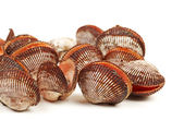 Raw scallop on white background — Stock Photo