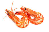 Fresh shrimp isolated on a white background — Stock Photo
