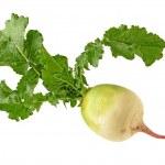 Turnip on white background — Stock Photo