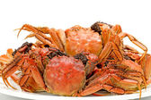 Steamed crab on white background — Stock Photo