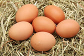 Egg collection — Stock Photo