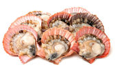 Scallop on the white background — Stock Photo