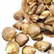 Clams on white background — Stock Photo