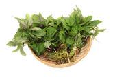 Fresh green mint on white background — Stock Photo