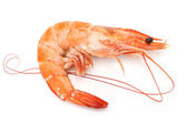 Shrimps on a white background — Stock Photo
