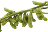 Green soy bean on white background — Stock Photo