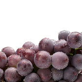 Grapes on white background — Stockfoto