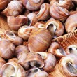 Live clams — Stock Photo #28888053