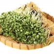 Black bean sprouts — Stock Photo