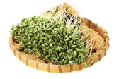 Black bean sprouts — Stockfoto