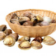 Clams — Stock Photo #28981029