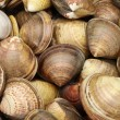 Live clams — Stock Photo #28981799