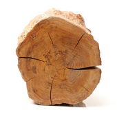Log isolated on a white background — Stock Photo