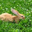Rabbit in the nature — Stock Photo