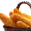 Grain corn — Stock Photo