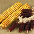 Red corn collection — Stock Photo