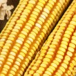 Stock Photo: Yellow corn