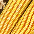 Yellow corn — Stock Photo