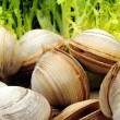 Live clams — Stock Photo #29788771