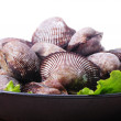 Live clams — Stock Photo #29865383