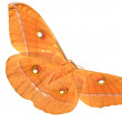 Silk moth on white background — Stock fotografie