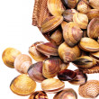 Live clams — Stock Photo #29866915