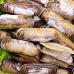 ������, ������: Razor clams