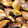 Live clams — Stock Photo #29907763