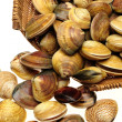 Live clams — Stock Photo #29907859
