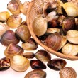 Live clams — Stock Photo #29907895