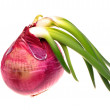 Stock Photo: Onion