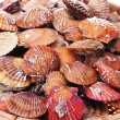 Scallop — Stock Photo