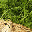 Fennel bunch — Stock Photo #30214651