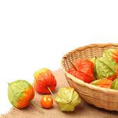 Physalis frukt isolerad på vit bakgrund — Stockfoto